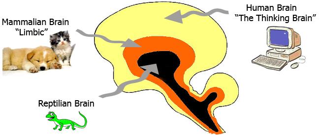 reptilian brain, mammal brain and the thinking brain
