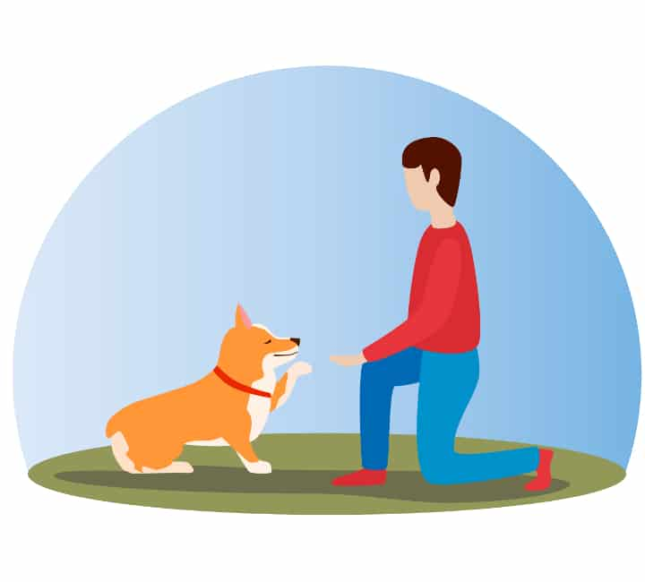 Dog gives paw to man who is kneeling on the ground. Training using continuous reinforcement schedules are very effective.