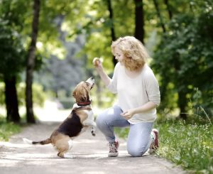 Woman trains beagle using treat in the park - extinction psychology