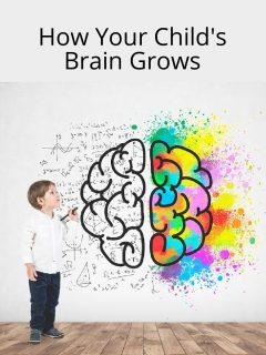 how brain grows