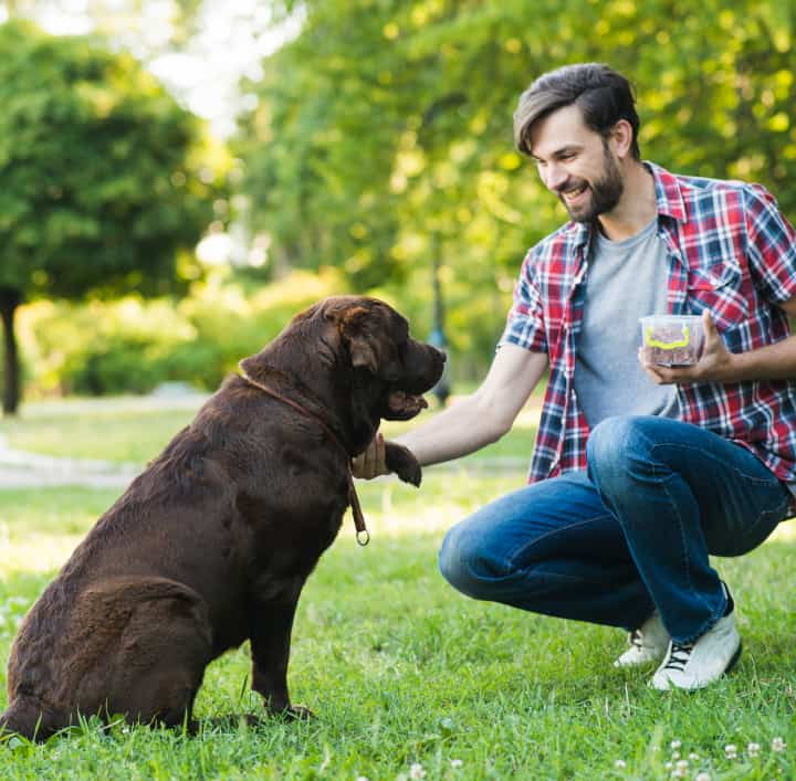 Dog raises its paw and man feeds treat - positive reinforcement