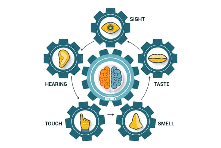 sight taste smell touch hearing surround a brain - what are the senses